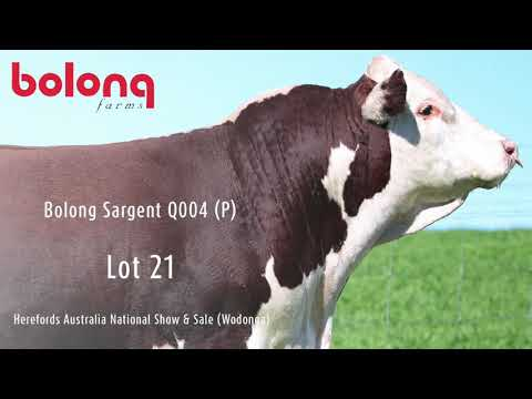 BOLONG SARGENT Q004 (P)