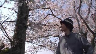 ほのまるが行く!桜の穴場お花見スポット鳥取県南部町法勝寺川
