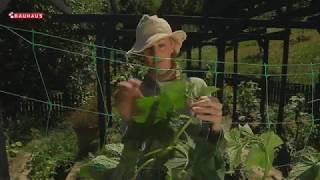 Škola Vrtlarstva - Krastavac