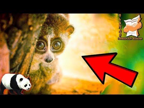 10 ყველაზე საყვარელი ცხოველი, რომლის გაბრაზებაც ნამდვილად არ ღირს (ვიდეო)