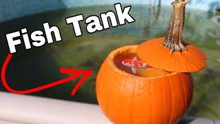 PUMPKIN FISH TANK With REAL FISH!!