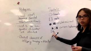 Pedigree Basics And Symbols