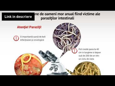 Papillomavírus condylomes vakcina