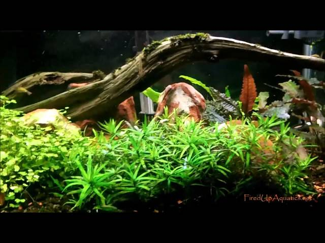 Aquascaping with&without Co2