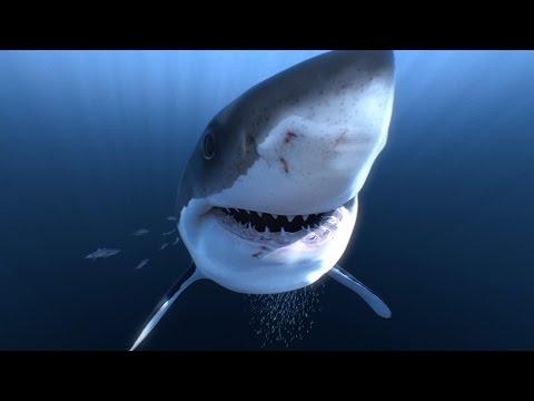 Büyük Beyaz Köpek Balıklarını Birde 360 Görün