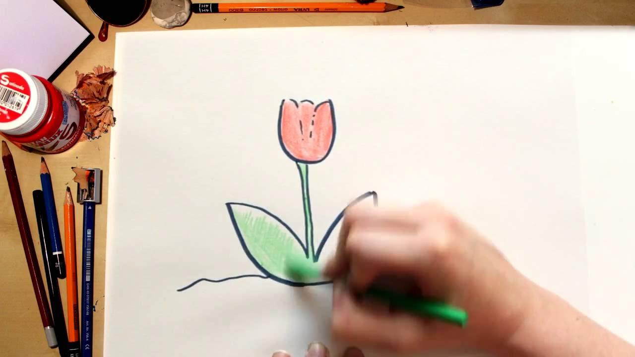 Como dibujar una Tulipa - dibujos para niños
