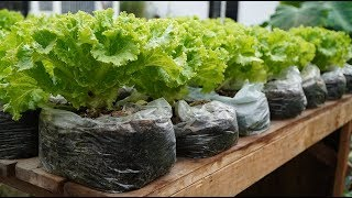 Recycle waste, grow salads in plastic bags