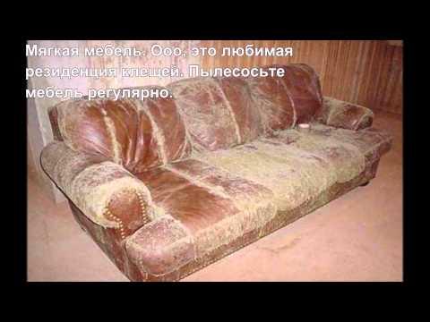 Мед.десятка #17. Самые опасные источники аллергии в доме