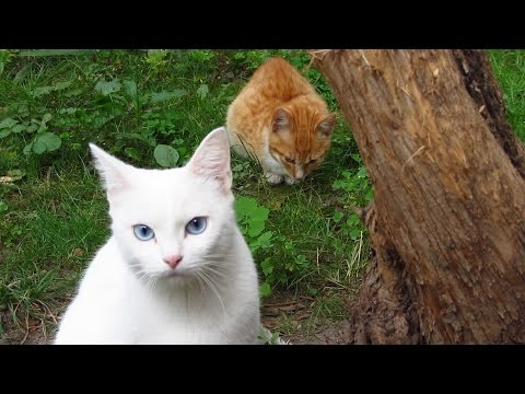 White cat with friends and kitten meows on the street