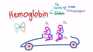Hemoglobin Structure; What's In Your Red Blood Cell?
