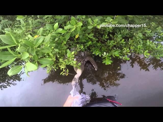 رجل ينقذ بجعة عالقة في حبال صيد