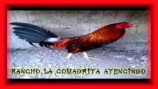 TIERRA CALIENTE (( GELAZ Y SU GRUPO DRAGON ))