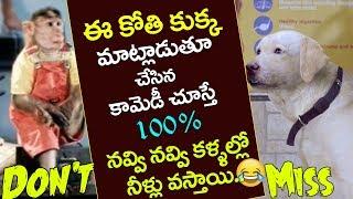 Monkey Dog Ultimate Comedy (( ఈ కోతి కుక్క మాటలు వింటే నవ్వు ఆగదు..) || Funny Videos 2017