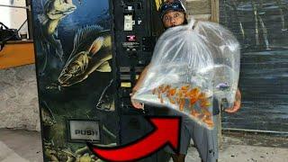 VENDING MACHINE Sells LIVE FISH!