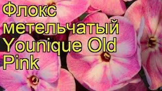 Флокс метельчатый Юник Олд Пинк. Краткий обзор, описание phlox paniculata Younique Old Pink