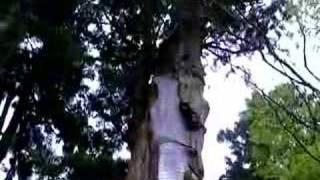 森林浴-小鳥