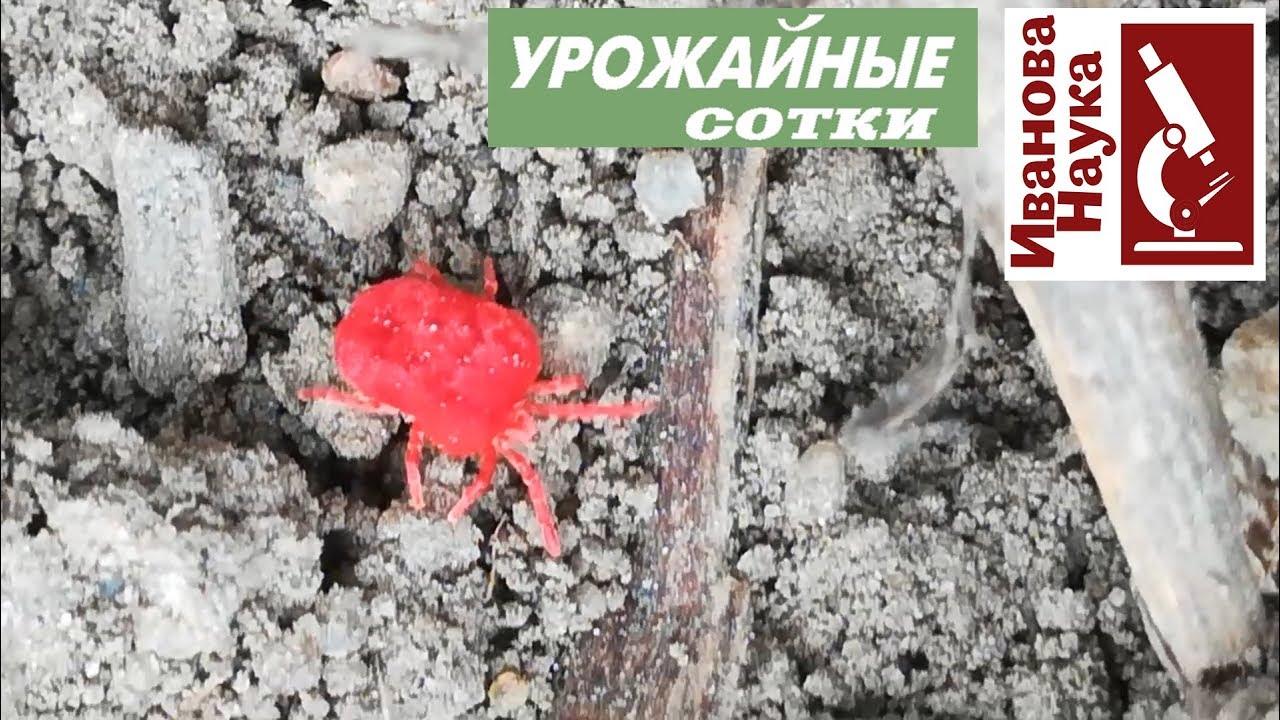 Красное ЧУДОВИЩЕ вылазит из земли, впивается в кожу и разжижает плоть!
