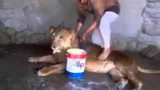 Все кошки не любят водные процедуры :)