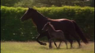 Лошади, клип
