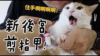 【黃阿瑪的後宮生活】新後宮剪指甲!
