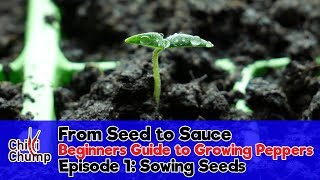 Episode 1:  Sowing Pepper Seeds (Beginners Guide to Growing Peppers)