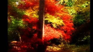 Autumn Forever by To/Die/For