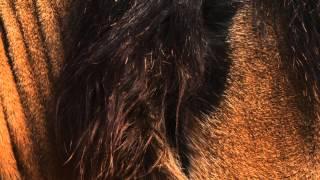 HVOB   Lion [Stil Vor Talent]