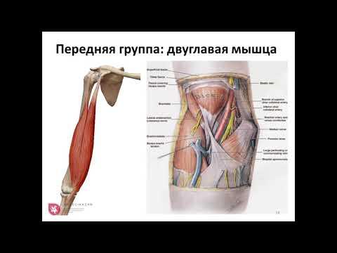 Как сделать УЗИ локтевого сустава?