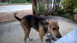 สุนัขที่ที่น่ารักที่สุด - dooclip.me