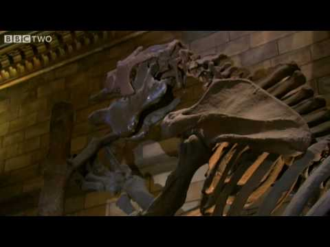 Giant Ground Sloth - Museum of Life - BBC Two