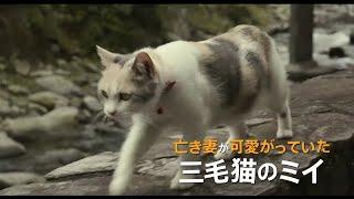 「先生と迷い猫」の動画