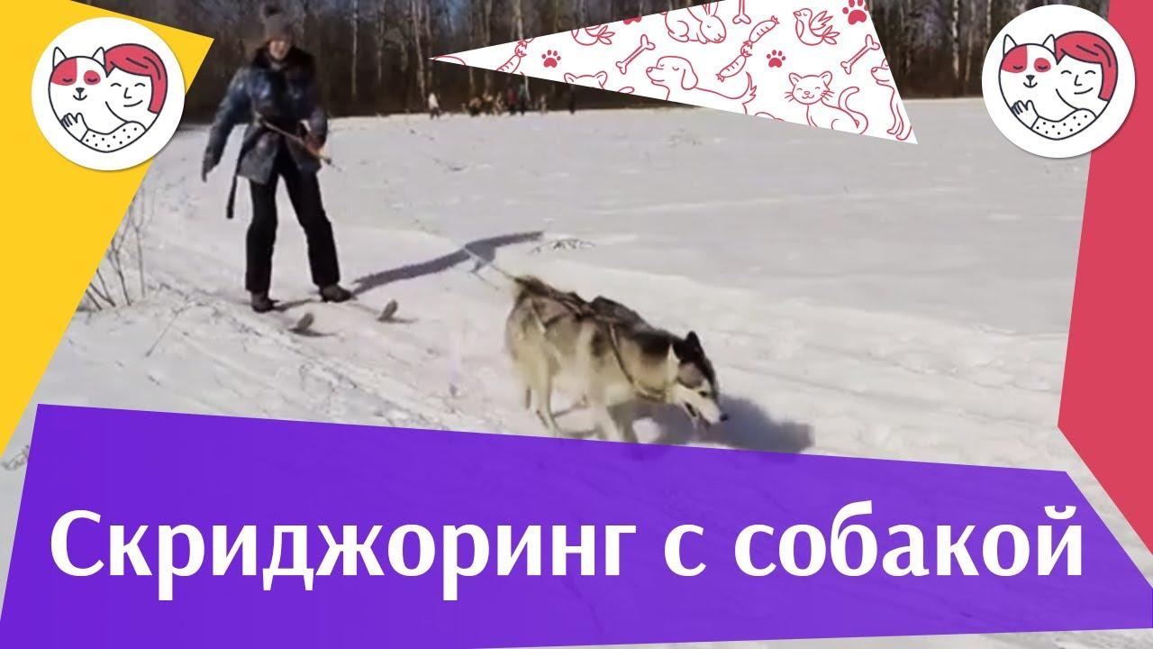 тренировка скиджоринг и каникросс ЗС Последний рубеж
