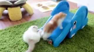 Смешные маленькие котята катаются на детской горке