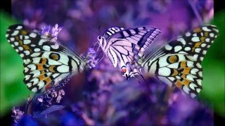 Glen Campbell   Elusive Butterfly