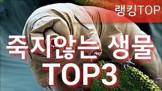[랭킹TOP]죽지않는 생물 TOP3