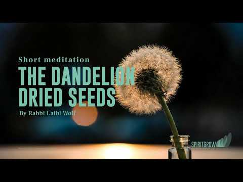 The Dandelion Dried Seeds