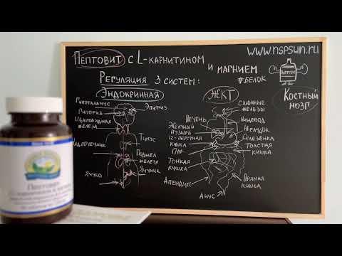 Пептовит с L карнитином и магнием НСП (NSP) - комплекс аминокислот