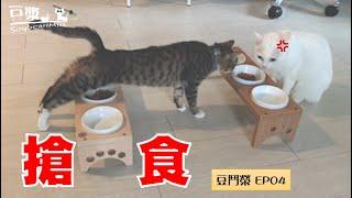 【豆鬥榮 EP04】有一種飯 叫做別人碗裡的飯