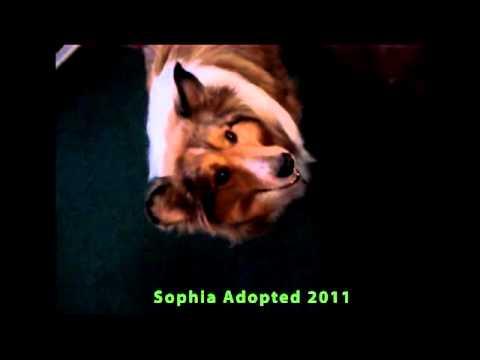 Sophia Sits