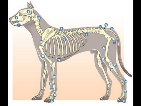 Anatomía Animal - Osteologia Introduccion 01