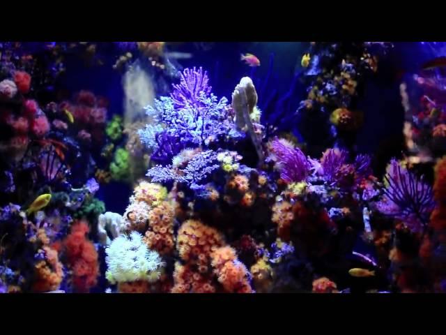 Non-Photosynthetic Reef Tank