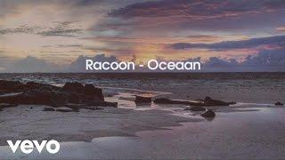 Racoon   Oceaan