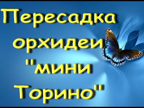 """Пересадка ОРХИДЕИ+состояние на 15день.Орхидея """"бабочка"""",похожая на мини""""Торино""""(это не её название))"""