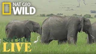 Safari Live - Day 88   Nat Geo Wild