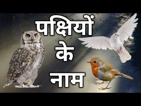Birds Name Hindi