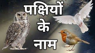 all birds name hindi and english - Kênh video giải trí dành