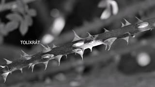 Video Nerrea - Blízko i daleko (Oficiální lyric video)