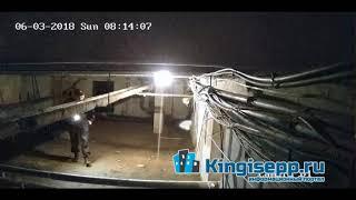 На Аптекарском пер. в Кингисеппе пойман ВОР. Видео момента преступления с веб-камеры KINGISEPP.RU