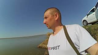 Когда ловить сазана в волгоградской области