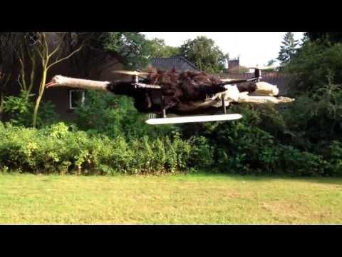 Dead Ostrich Takes Flight As A Cyborg Quadcopter Monstrosity